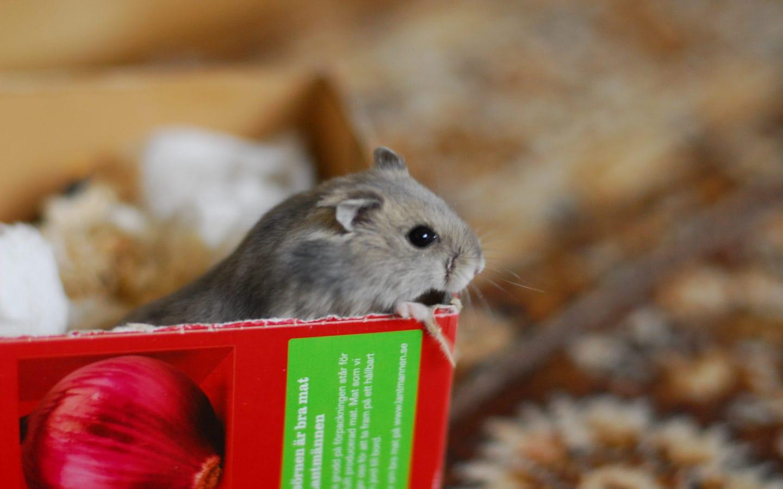 husdjur för pälsdjursallergiker