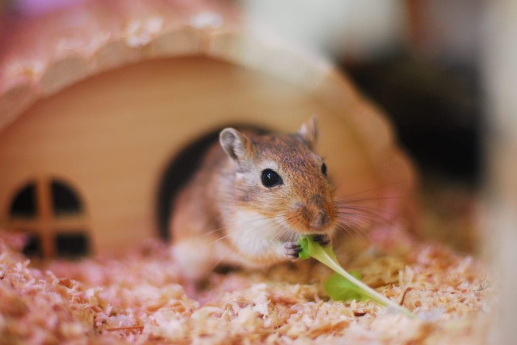 Astrid äter ett salladsblad